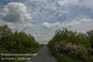 Rails to trails birds -21-2