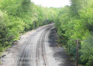 Rails to trails birds -23-2
