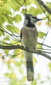 Rails to trails birds -24