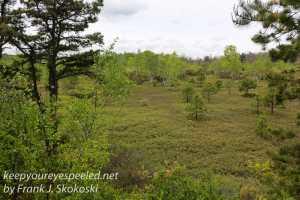 Rails to trails birds -28