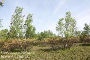 Rails to trails heath barrens -5