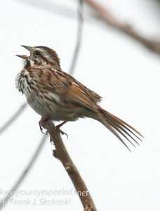 birds -25