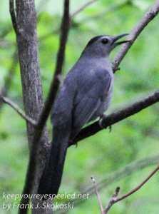 birds PPL Wetlands -11