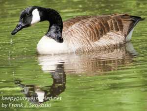 birds PPL Wetlands -14