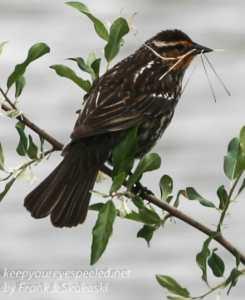 birds PPL Wetlands -15