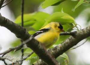 birds PPL Wetlands -19