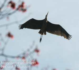railroad hike birds -1