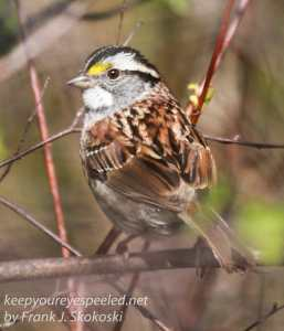 railroad hike birds -4
