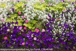 flowers on Temple Square Salt lake City