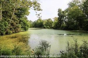 duck weed covered pond