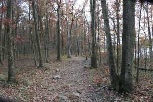 leafless trees on trail