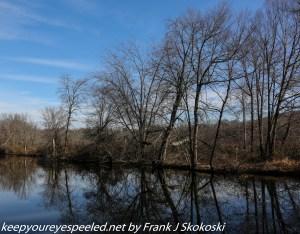 leafless trees along pond