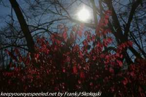 sun and red leaves in PPL wetlands