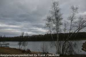 bare trees and clouds at lake