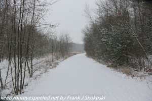 tree lined and snow covered path