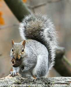 squirrel with nut in tree