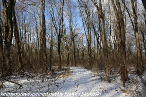 bare trees along snow covered trail