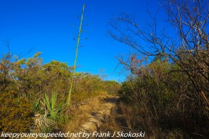 shrubs and trees on ballena trail