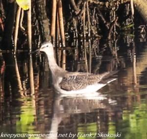 wading bird on pond