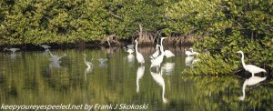 birds on pond
