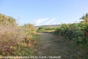 trail near Ballena beach