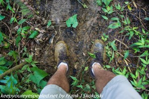 muddy shoes in rain forest