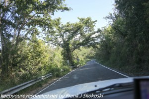tree lined road in Guanica dry forest