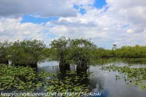 clouds and water lily covered ponds