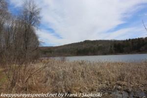 wetlands along lake