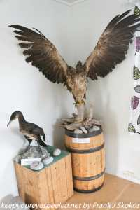exhibits at bird safari