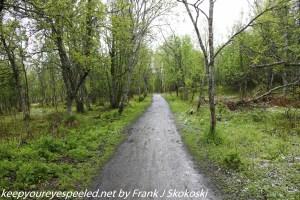 tree lined path near lake