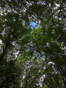 trees over trail