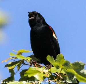 male cat bird in tree