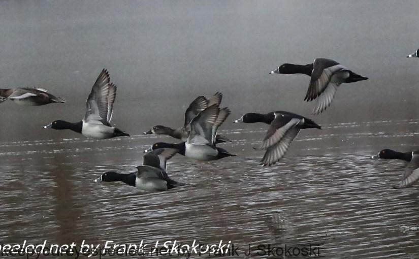 PPL-wetlands-31-of-44