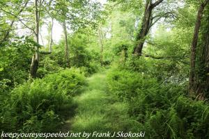 lush green woodlands