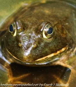 close up of frog