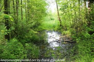tree lined wetlands