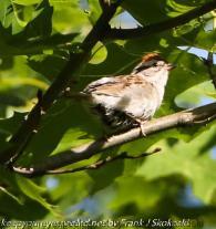 sparrow in tree