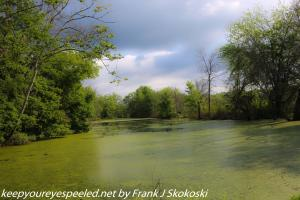 clouds over duckweed covered lake