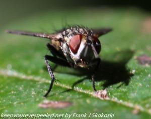 fly macro lens
