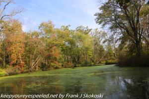 lake in wetlands end of summer
