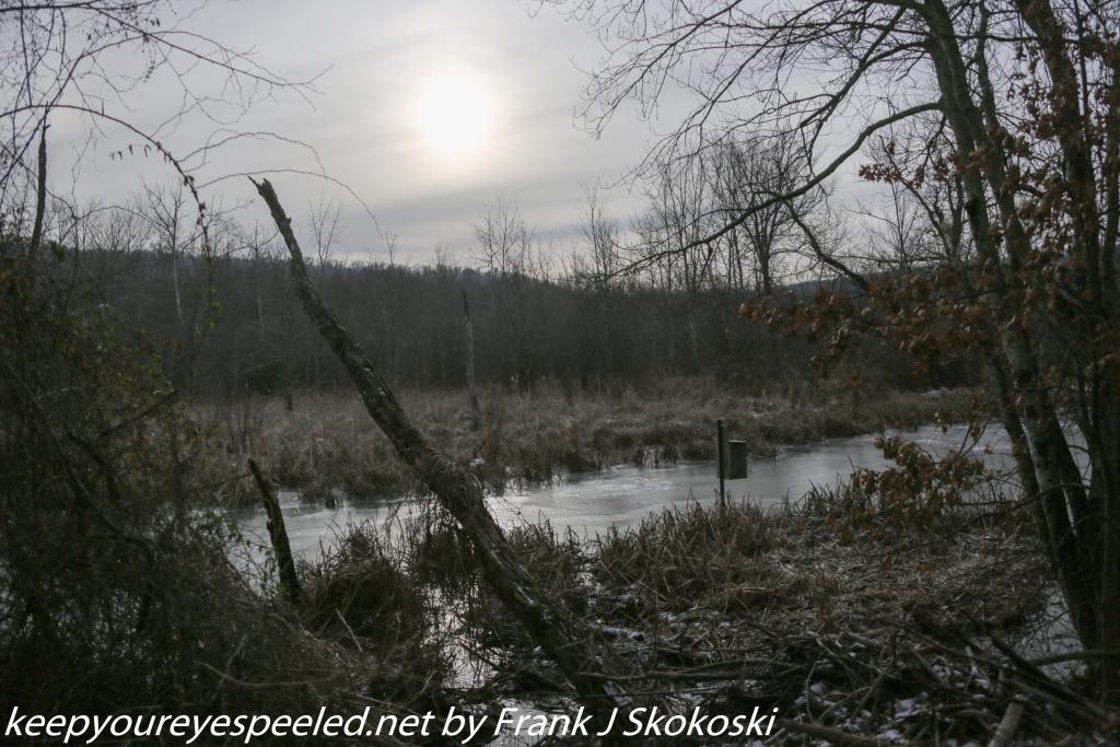 PPL wetlands (4 of 46)
