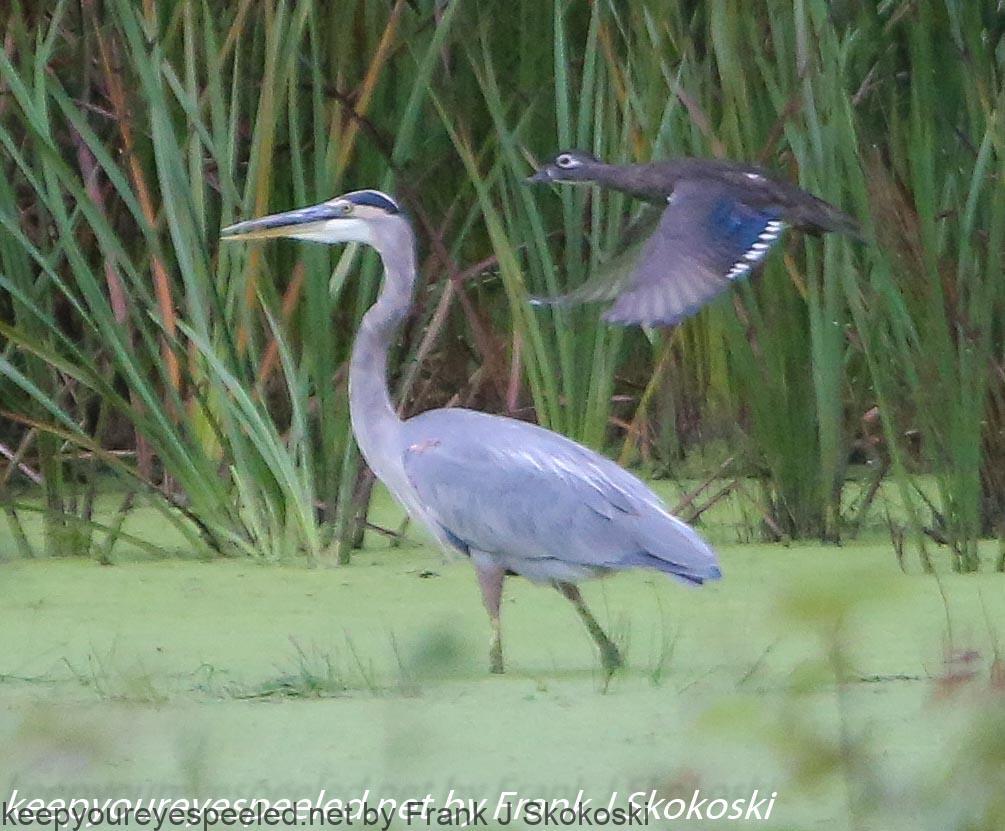 PPL Wetlands (19 of 33)