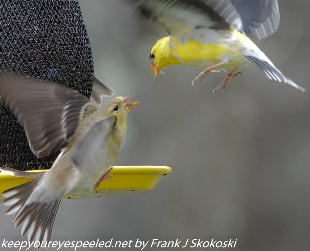 birds (2 of 6)