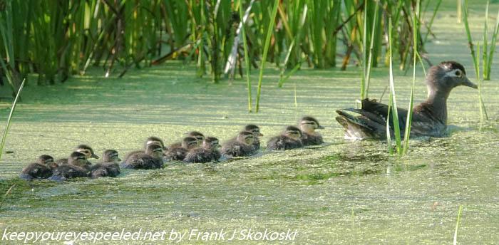 Susquehanna wetlands (7 of 40)