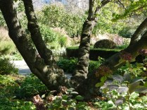 Central Park, Conservatory Garden, 2011