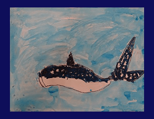 shark17