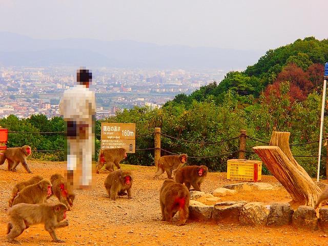 猿山の餌やり