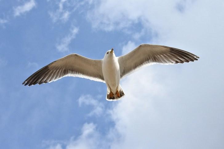 a bird in the sky
