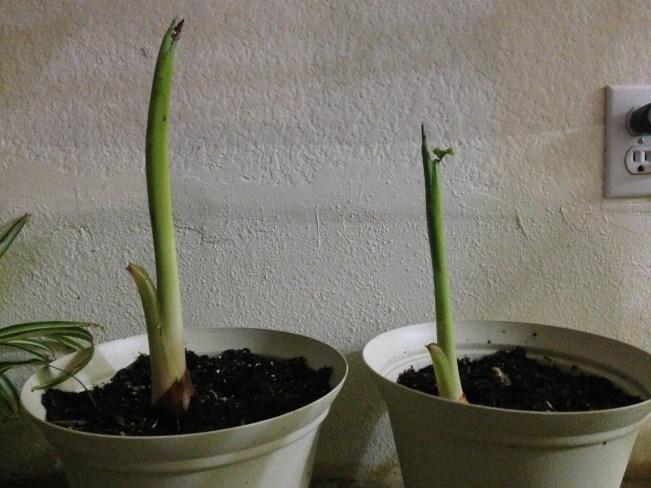 plant 1&2